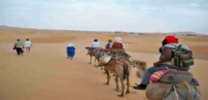 camel-trekking-desert-300x145 8 Days Desert tour from Fez To Ouarzazate Via Sahara Desert
